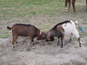 東大山さくらまつり 乗馬体験