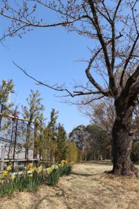 浜松城公園作佐の森