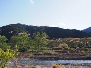 大井川鯉のぼり